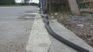 Laneya - Born To Be Wild (1 yo Laneya vs. Big Snake)