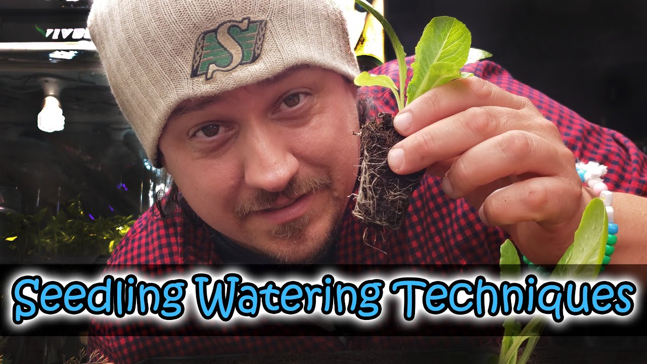Download How To Water Seedlings And Small Pots - Garden Quickie Episode 22
