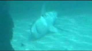 Dead Sharks at the Atlantis!