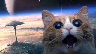 РумЯн - Мой кот любит Hip-Hop . Это трек про кота .