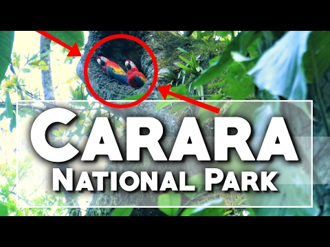 Things To Do In Costa Rica | Carara National Park