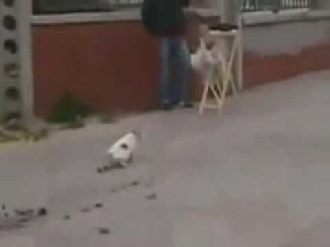 Cat Disappointed By Own Ninja Fail