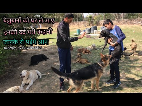 Free Dogs German Shepherds Labrador Dalmation Great dane Indian dogs Bully Pitbull by Royal Soldier