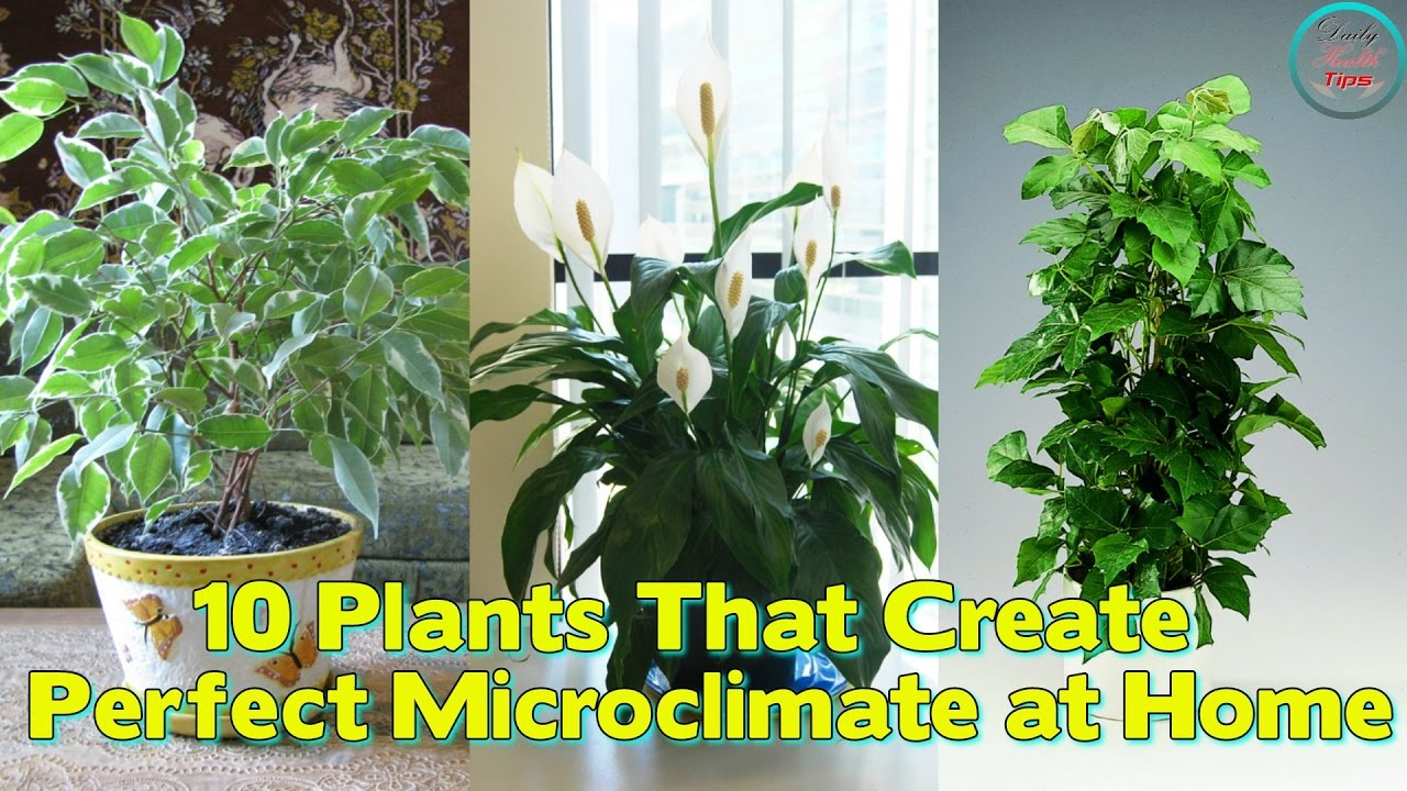 Plants That Create the Perfect Microclimate at Home
