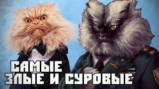 ГАРФИ и ПОЛКОВНИК МЯУ. Самые суровые коты в мире