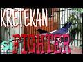 Masteran Murai Batu Medan Dari Wikplongg Kretekan Ngroll Sampe Nembak  Mp3 - Mp4 Download