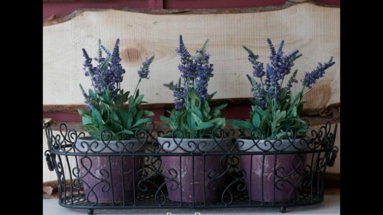 planting lavender in pots - How To Grow Lavender Indoors
