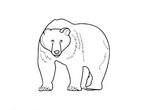How to Draw a Bear / Как нарисовать медведя
