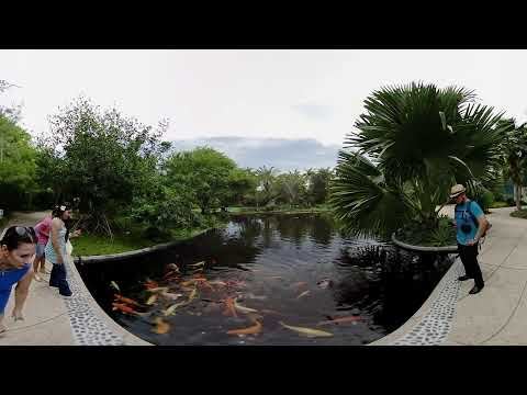 3D 360 VR - Miami Beach Botanical Garden!