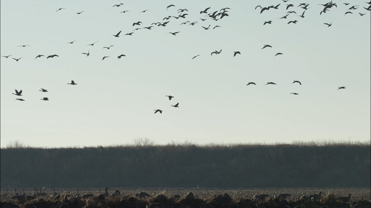 Time and Place - A Waterfowl Hunting Film by Slade Northwest