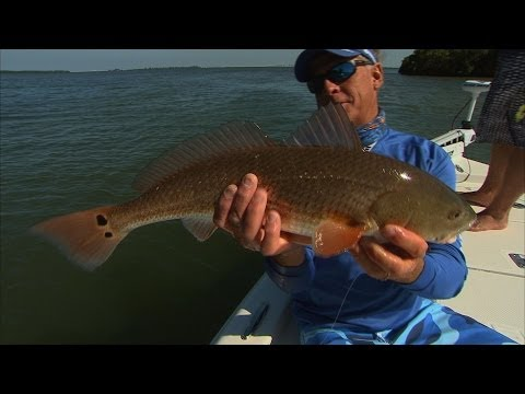 Tampa Florida fishing for snook and redfish