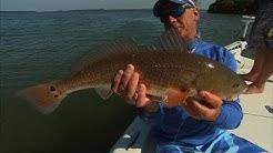 Inshore Fishing Tampa Bay Florida for Snook and Redfish