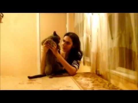 Британский кот в добрые руки МОСКВА