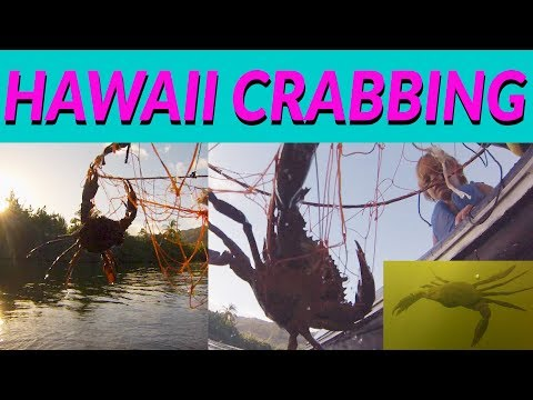 HAWAII Crabbing In A RIVER!!! The Basics On HOW TO Go CRABBING In HAWAII - KIDS CRABBING