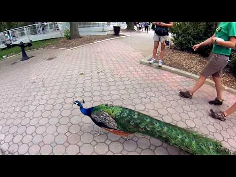 Staten Island Zoo, New York  2015 - part 1