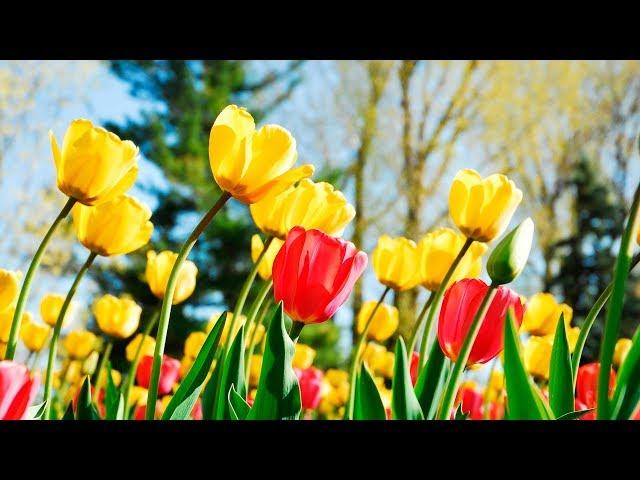 Смотреть видео Женская весна - Людмила Соколова