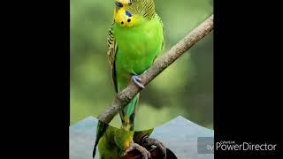 Фото попугая
