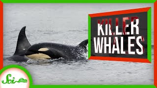 "5 Ways Orcas Have Earned the Nickname ""Killer Whale"""