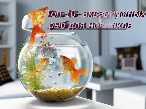 ТОП -10АКВАРИУМНЫХ РЫБ ДЛЯ НОВИЧКОВ.