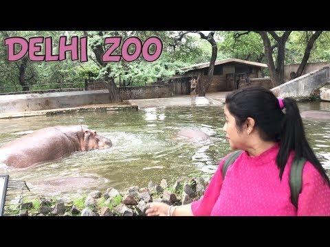 दिल्ली का चिड़िया घर सावन के मौसम मे  ! Delhi Zoo All Animal !! Deepti vlog
