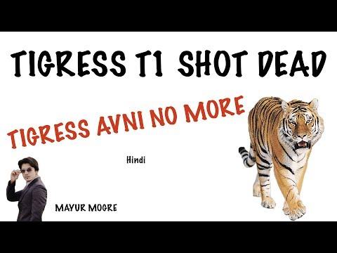 Tigress T1 (Avani) Shot dead | Wildlife protection Act 1972 | Current Affairs