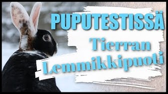 PUPUTESTISSÄ: Tierran Lemmikkipuoti