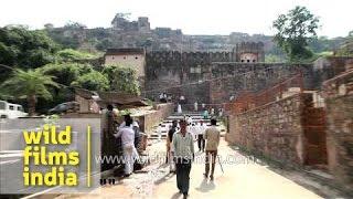 Ranthambhore Fort at Sawai Madhopur, Rajasthan