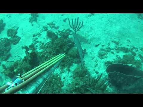 Chasse sous marine Martinique 10