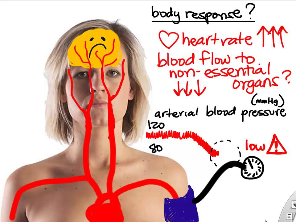 BIO160 Preview Video Lecture 1 Introduction to Anatomy and ...