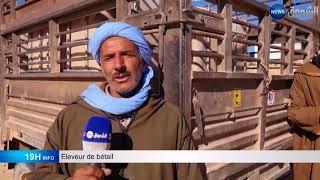 Le bétail de Laghouat a soif