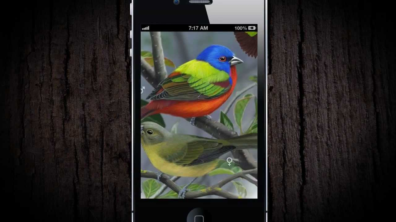 Best Birding Apps for iPhone, Android, Tablets (2019)
