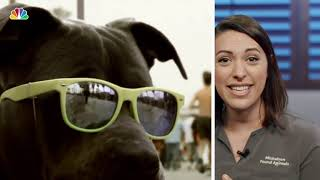 How to Protect Your Pets From the Sun | Clear the Shelters