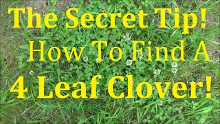 How to Find a Lucky 4 Leaf Clover. Easy tip to make it easier. Let'...