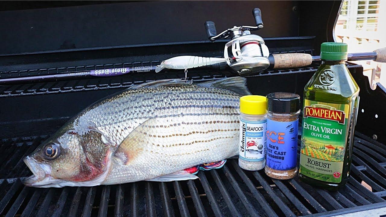Catch n' Grill Striped Bass - Crazy Feeding Frenzy!