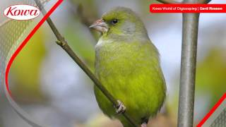 Welcome to the World of Kowa Digiscoping