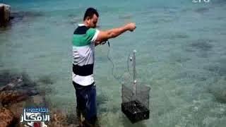 تقرير  .. إبتكار الة روبين كاميرا تخترق مياه البحار لإختيار انواع الاسماك قبل صيدها