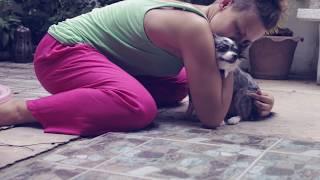Собака и ребенок в доме: Как приучить собаку к ребенку | Часть 2(Наш курс Собака и ребенок поможет вам, если у вас уже есть собака и скоро в доме появится еще и ребенок, или..., 2015-07-22T17:05:31.000Z)