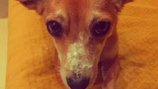 *Ноггано - Собака съела товар