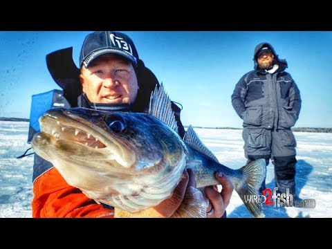 Ice Fishing Walleye Using Spoons And Plastics