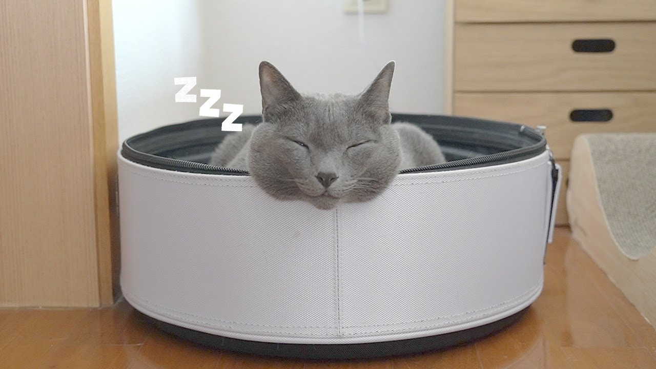 평범하게 자는 법을 까먹은 고양이