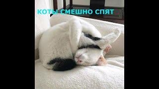 Коты спят в смешных позах, приколы с котами, странные позы котов, подборка смешных котов 2020