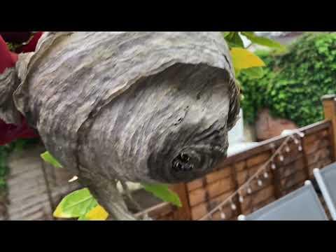 First Wasps Nest 2021