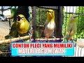 Mantap Nih Burung Contoh Contoh Pleci Yang Memiliki Materi Lagu Mewah  Mp3 - Mp4 Download