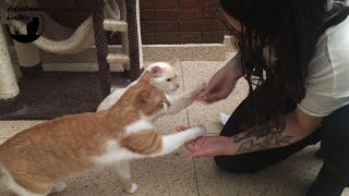 Como enseñar a mi gato a dar la pata