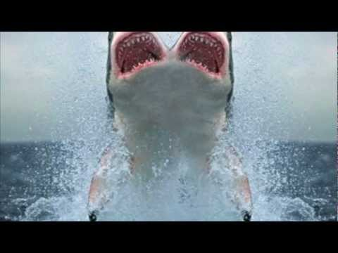 two headed shark youtube