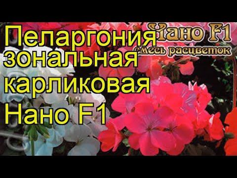 Пеларгония карликовая Нано. Краткий обзор, описание характеристик pelargonium Nano