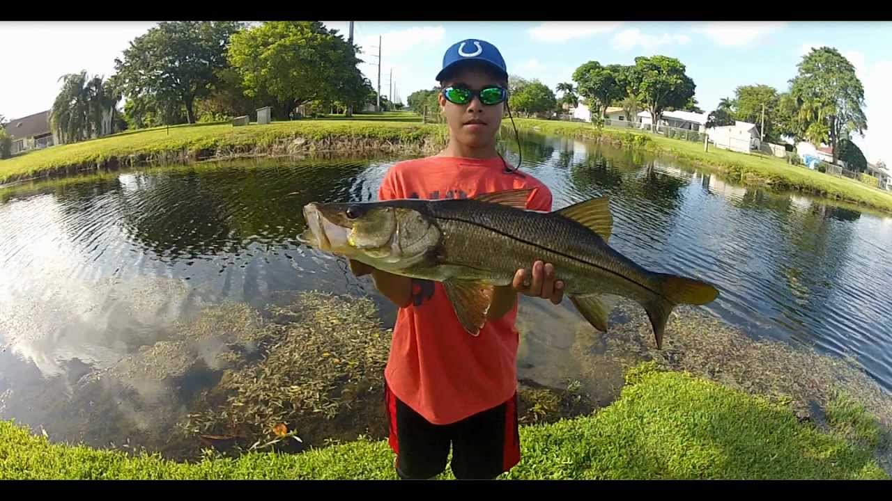 Giant freshwater snook youtube for Florida fishing license lookup