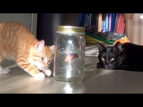 Cat + Kitten + 'Butterfly' = Cuteness Overload!