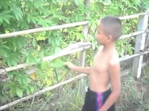 เด็กน้อย 2009
