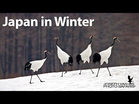 Japans Winter Wildlife